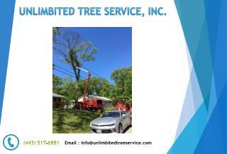Tree Trimming Service Near Pasadena