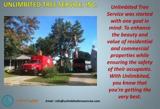 Tree Service Silver Spring - Call Today