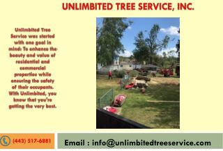 Tree Service Kent Island