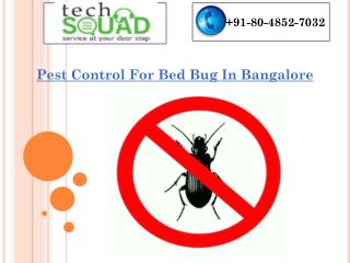 Pest Control For Bed Bug In Bangalore
