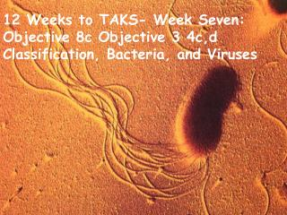 12 Weeks to TAKS- Week Seven:  Objective 8c Objective 3 4c,d Classification, Bacteria, and Viruses
