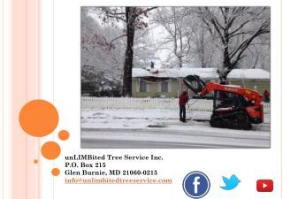 Tree Service, Storm Damage Annapolis