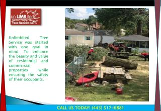 Tree Expert, Tree Removal Maryland