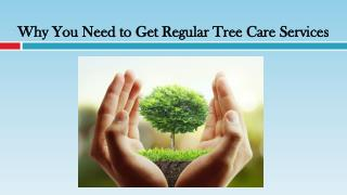Why You Need to Get Regular Tree Care Services