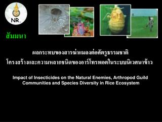 Impact of Insecticides on the Natural Enemies, Arthropod Guild  Communities and Species Diversity in Rice Ecosystem