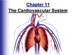 Chapter 11 The Cardiovascular System