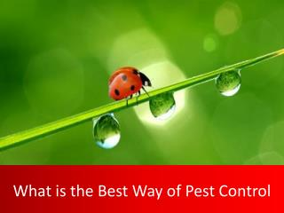 What is The Best Way of Pest Control