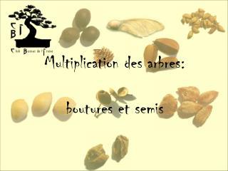 Multiplication des arbres:  boutures et semis
