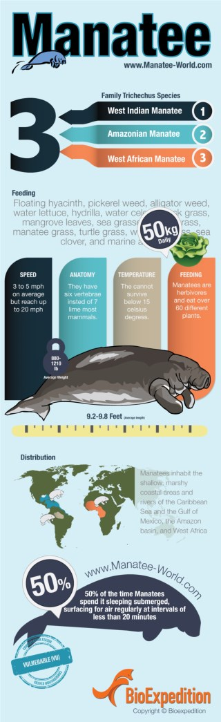Manatee Facts and Information