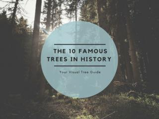 The 10 famous Trees in history