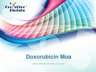 Doxorubicin Moa