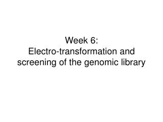 Week 6: Electro-transformation and screening of the genomic library
