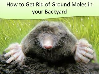 How to Get Rid of Ground Moles in Your Backyard