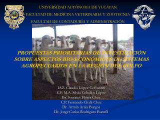 PROPUESTAS PRIORITARIAS DE INVESTIGACI N SOBRE ASPECTOS BIO-ECON MICOS DE SISTEMAS AGROPECUARIOS EN LA REGI N DEL GOLFO