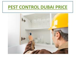 Pest Control Services Dubai