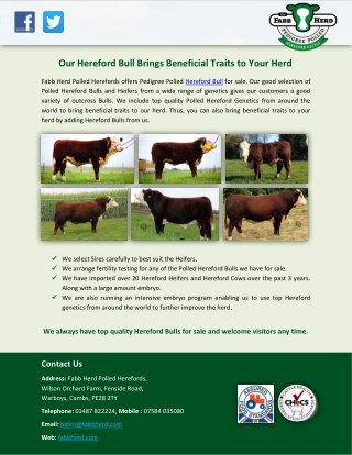 Our Hereford Bull Brings Beneficial Traits to Your Herd