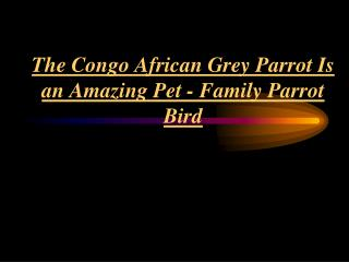Family Parrot Bird - The African Grey Parrot Is An Amazing Pet