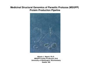 Medicinal Structural Genomics of Parasitic Protozoa MSGPP  Protein Production Pipeline