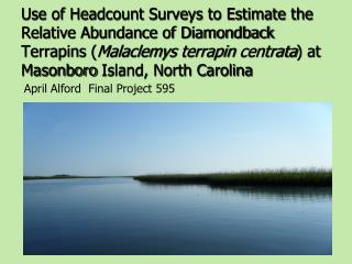 Use of Headcount Surveys to Estimate the Relative Abundance of Diamondback Terrapins Malaclemys terrapin centrata at Mas