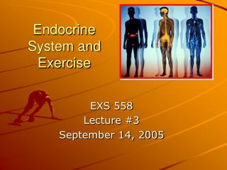 Endocrine System and Exercise