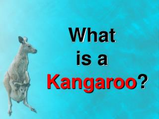 What  is a    Kangaroo