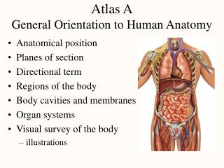 Atlas A General Orientation to Human Anatomy