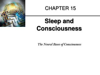Sleep and Consciousness   The Neural Bases of Consciousness