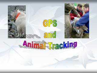 GPS and Animal Tracking
