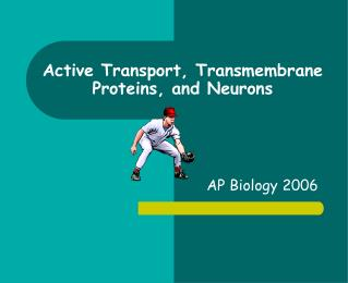 Active Transport, Transmembrane Proteins, and Neurons