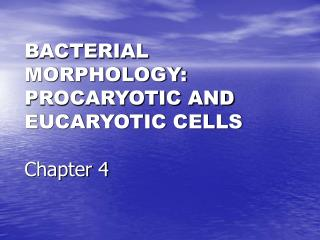 BACTERIAL MORPHOLOGY: PROCARYOTIC AND EUCARYOTIC CELLS  Chapter 4