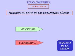 EDUCACI N F SICA