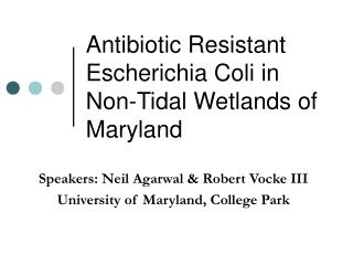 Antibiotic Resistant Escherichia Coli in Non-Tidal Wetlands of Maryland