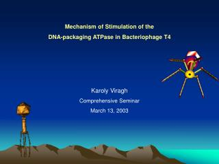 Mechanism of Stimulation of the  DNA-packaging ATPase in Bacteriophage T4