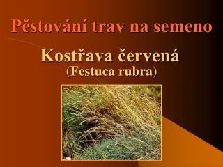 Pestov n  trav na semeno