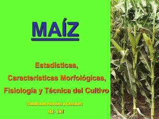 MA Z                   Estad sticas,     Caracter sticas Morfol gicas,   Fisiolog a y T cnica del Cultivo