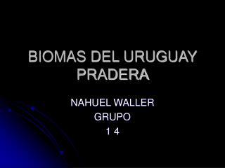BIOMAS DEL URUGUAY PRADERA