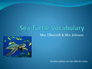 Sea Turtle Vocabulary