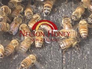 Nelson Honey - the company