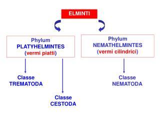 ELMINTI