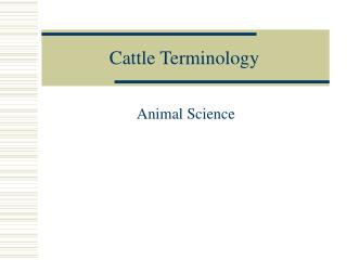 Cattle Terminology