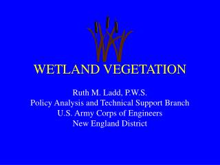 WETLAND VEGETATION