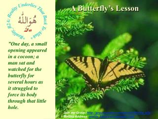 A Butterfly s Lesson