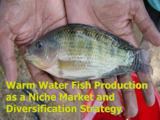 Warm Water Fish Production as a Niche Market and Diversification Strategy