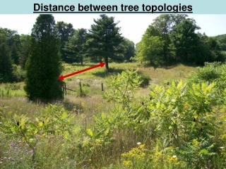 Distance between tree topologies