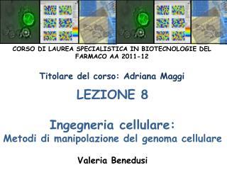 LEZIONE 8  Ingegneria cellulare: Metodi di manipolazione del genoma cellulare  Valeria Benedusi