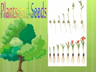 Plants and Seeds