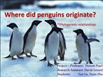 Where did penguins originate -Phylogenetic relationships