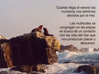 Cuando llega el verano los humanos nos sentimos atra dos por el mar.  Las multitudes se congregan en las playas en busca