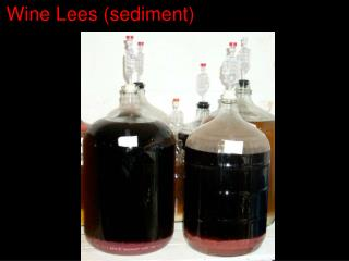 Wine Lees sediment