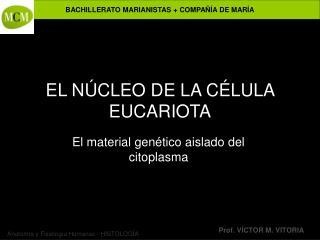 EL N CLEO DE LA C LULA EUCARIOTA